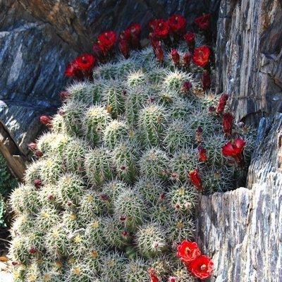Central Arizona Highlands