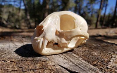 Fresh Air Moments: Skulls