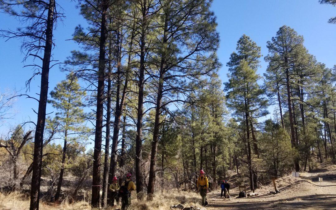 Fresh Air Moments: Restoration on Lynx Creek