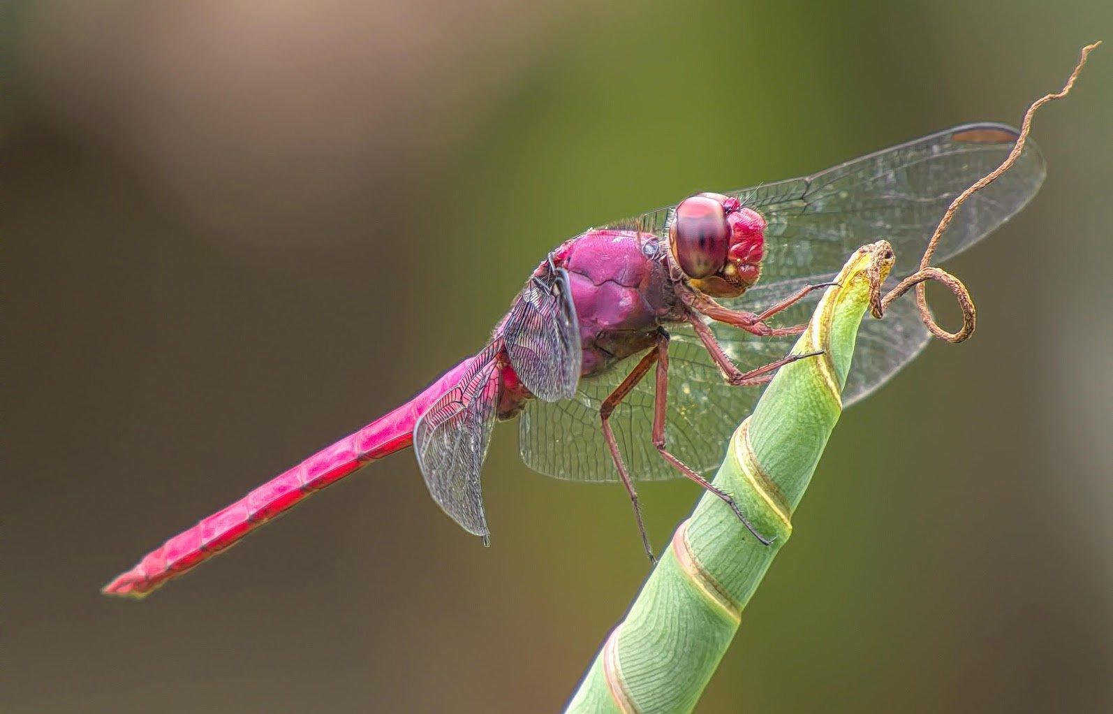Dragonfly Insights to the Outdoors