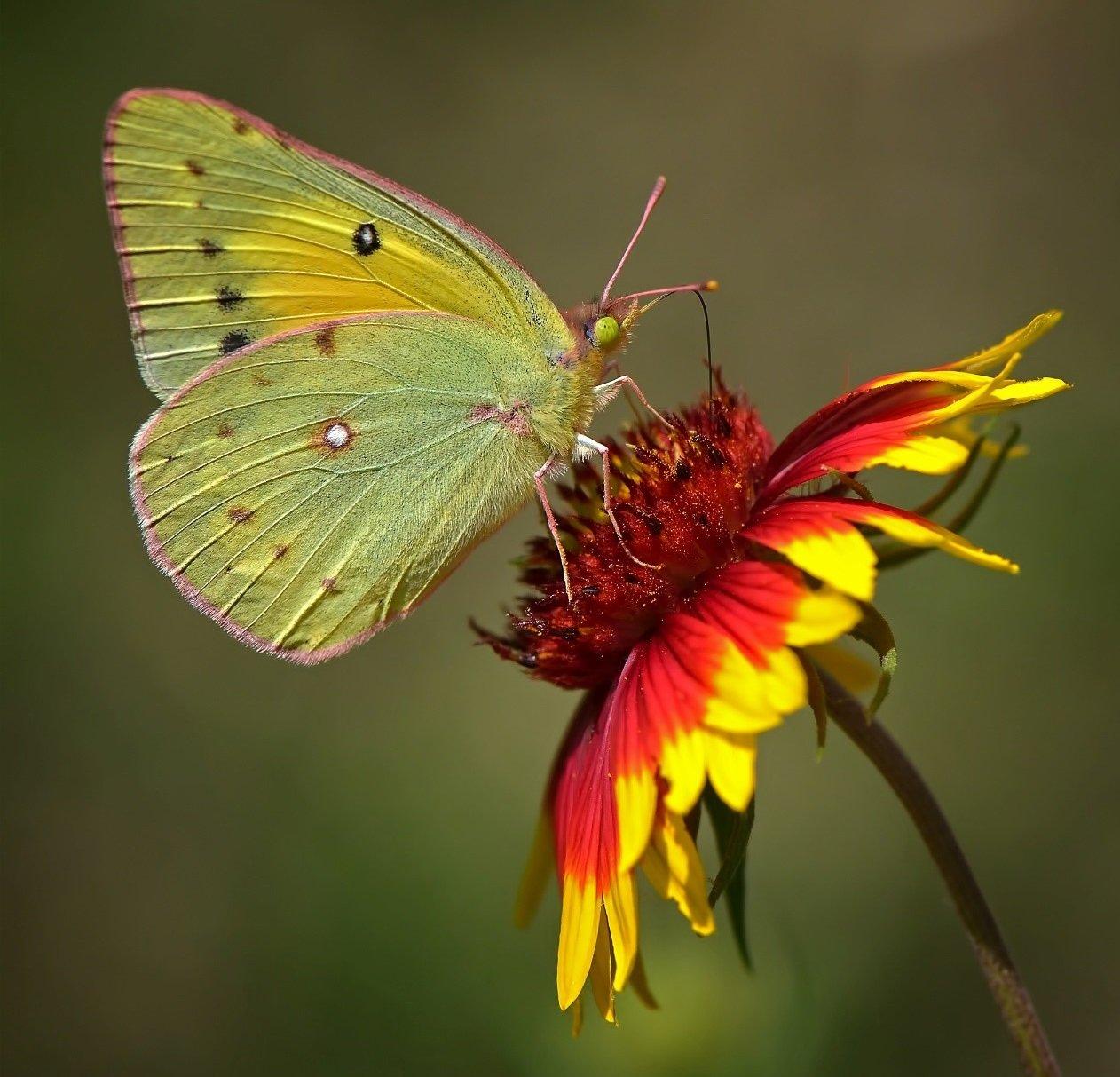 fall butterfly fuel