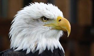 The Eagle's Edge