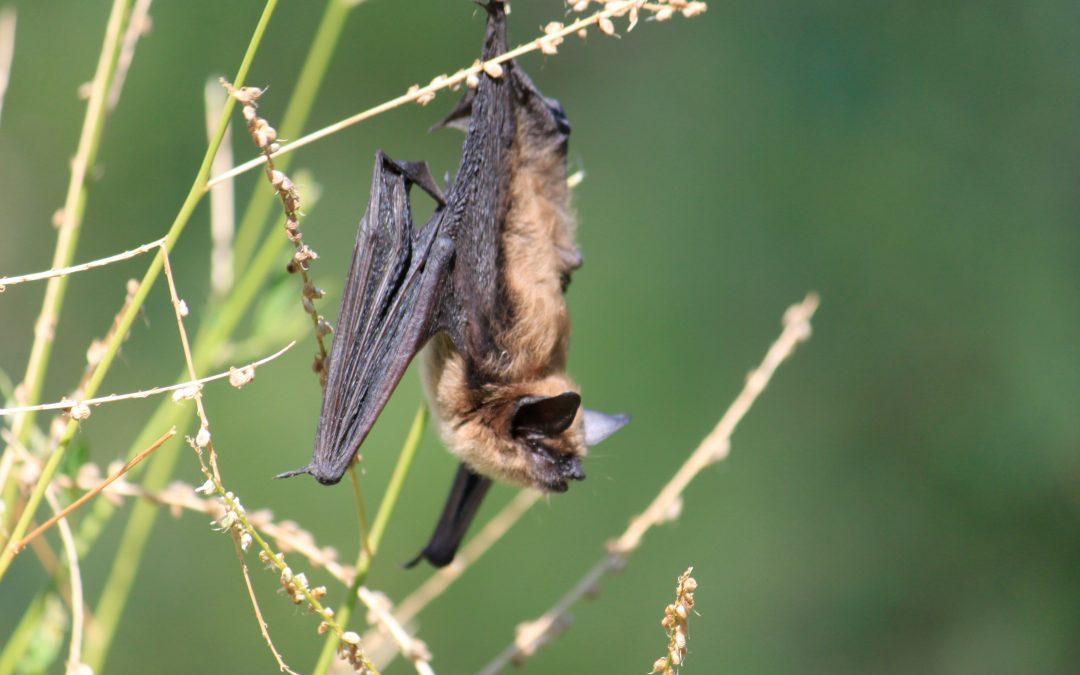 Bat Business
