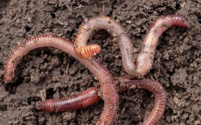 Fresh Air Moments: What's the Word on Worms?
