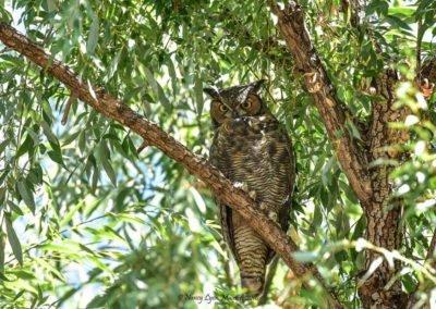 wtw-owl